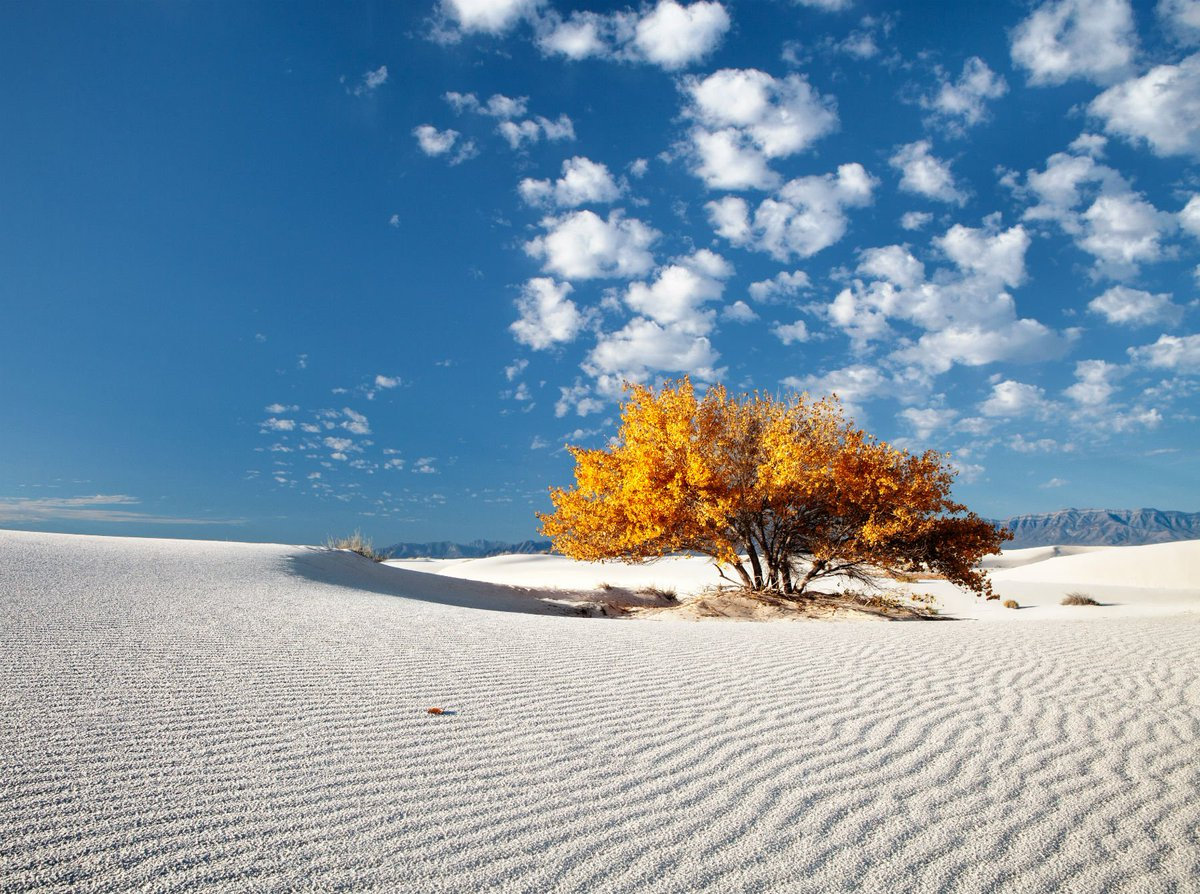 A touch of fall color really stands out @WhiteSands_NPS. Pic by Jim Langford #NewMexico
