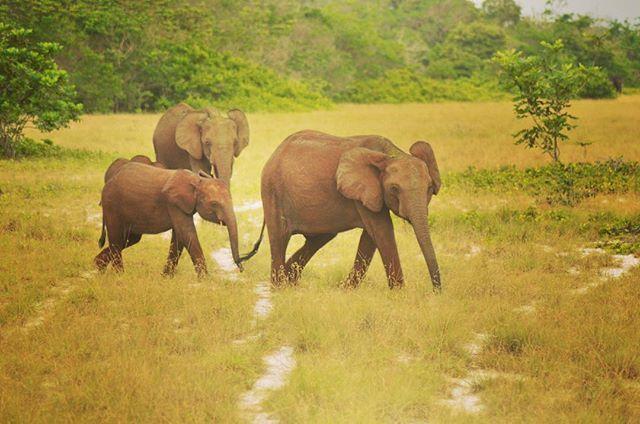 See Wild Travels Ltd on Twitter: