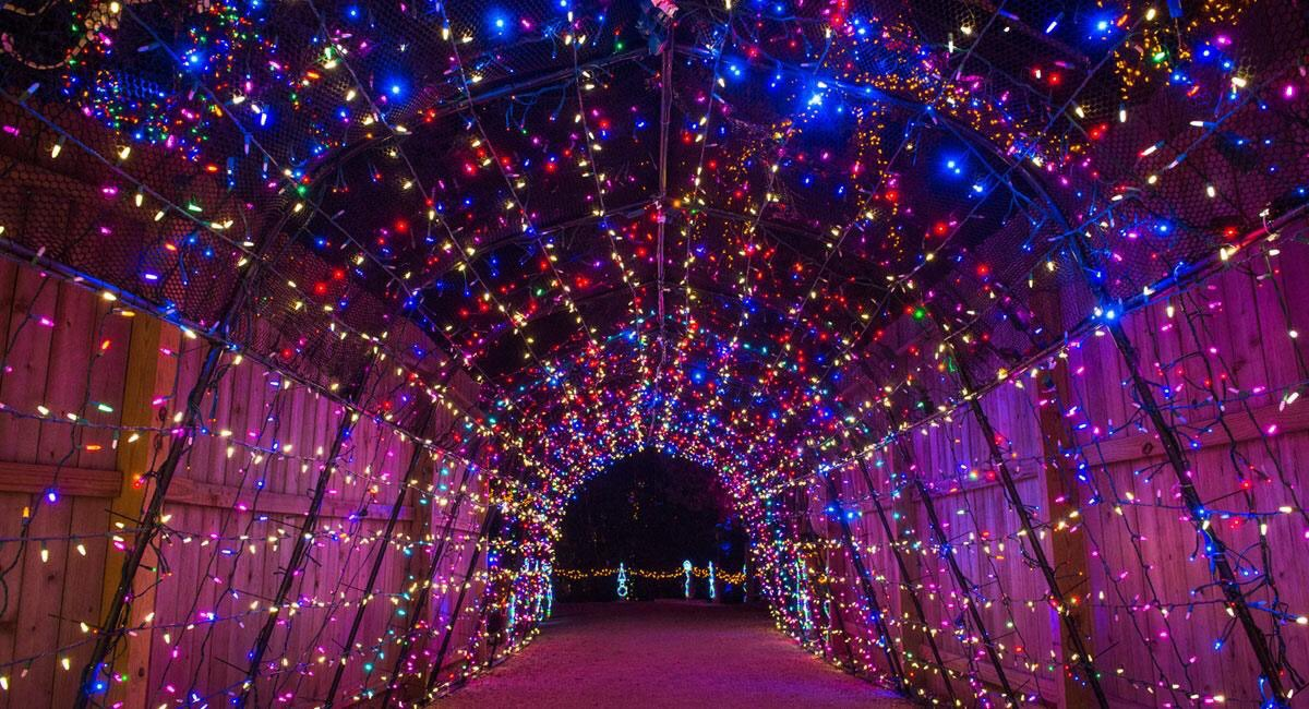 Your Favorite Places In Houston On Twitter Houston Zoo Lights