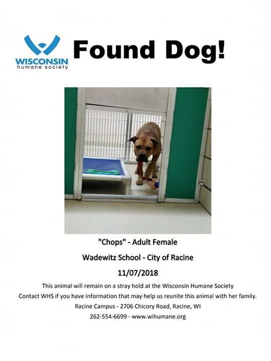 Wisconsin Humane Society على تويتر: