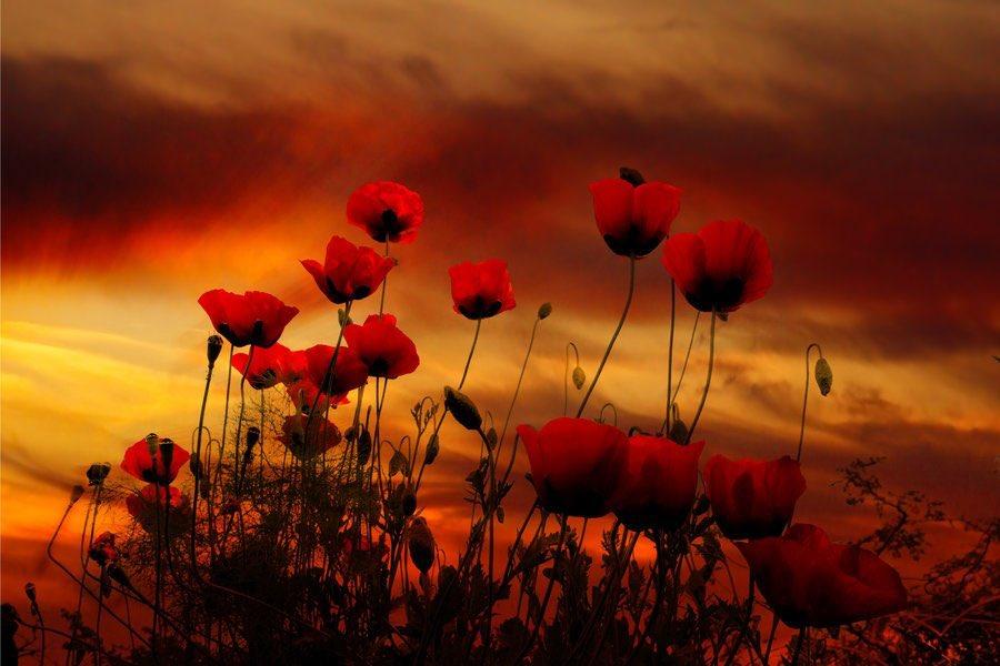 @FlowerSree @snowleopard56 @encarnacion67 @gamila2103 @justbeyou432 @FlowerchildRT a beautiful evening everyone 😘❤️🍁🧡