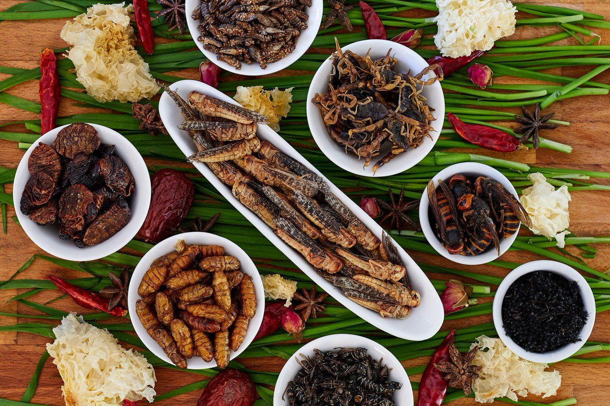 Pests as dinner? What do you think about cooking with bugs? https://t.co/kXcSFYf64w https://t.co/qvIUiI1dTW