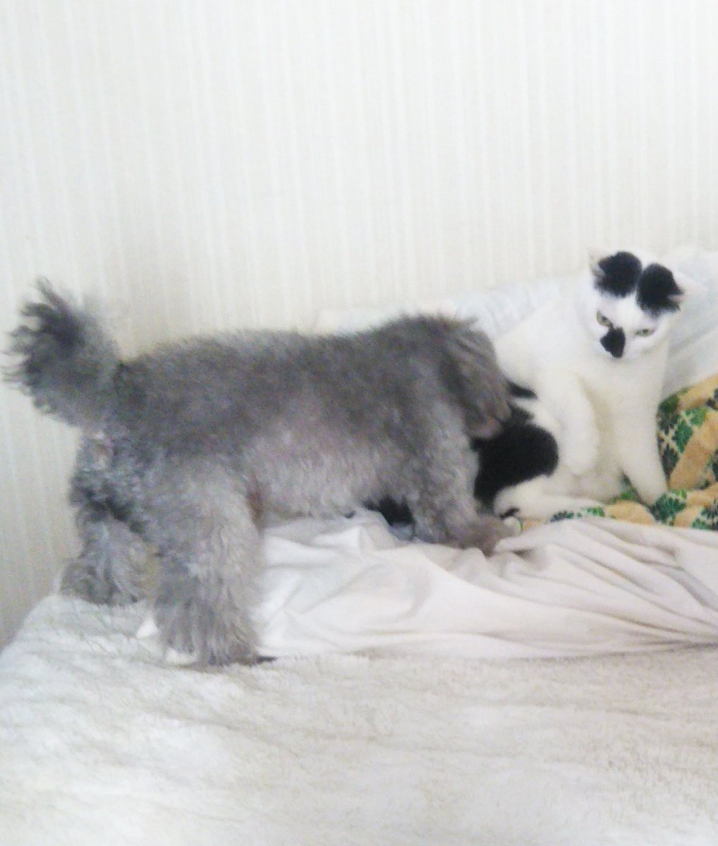 今朝の、猫をかまいすぎてしかられる犬。犬「ねえねえ!ねえねえ!」猫「いいかげんにしろ」犬「いひゃああああぁぁあああ」