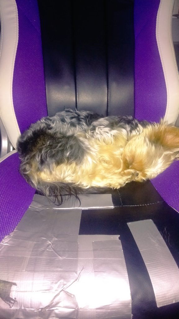 The adorable reason my chair is now more duct tape than  chair @noblechairs I hope santa has been checking my browsing history   #PETSアカデミア #Puppy #saveme #zhazims <br>http://pic.twitter.com/cOTidJk1SF