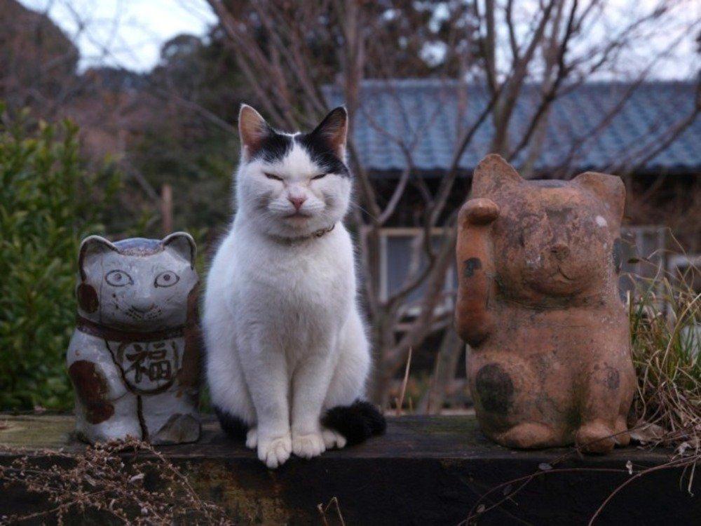 岩合光昭写真展「やきものの里のネコ」茨城しもだて美術館で - 陶芸の町に暮らすネコたちの姿 - https://t.co/qlq5DgasEZ
