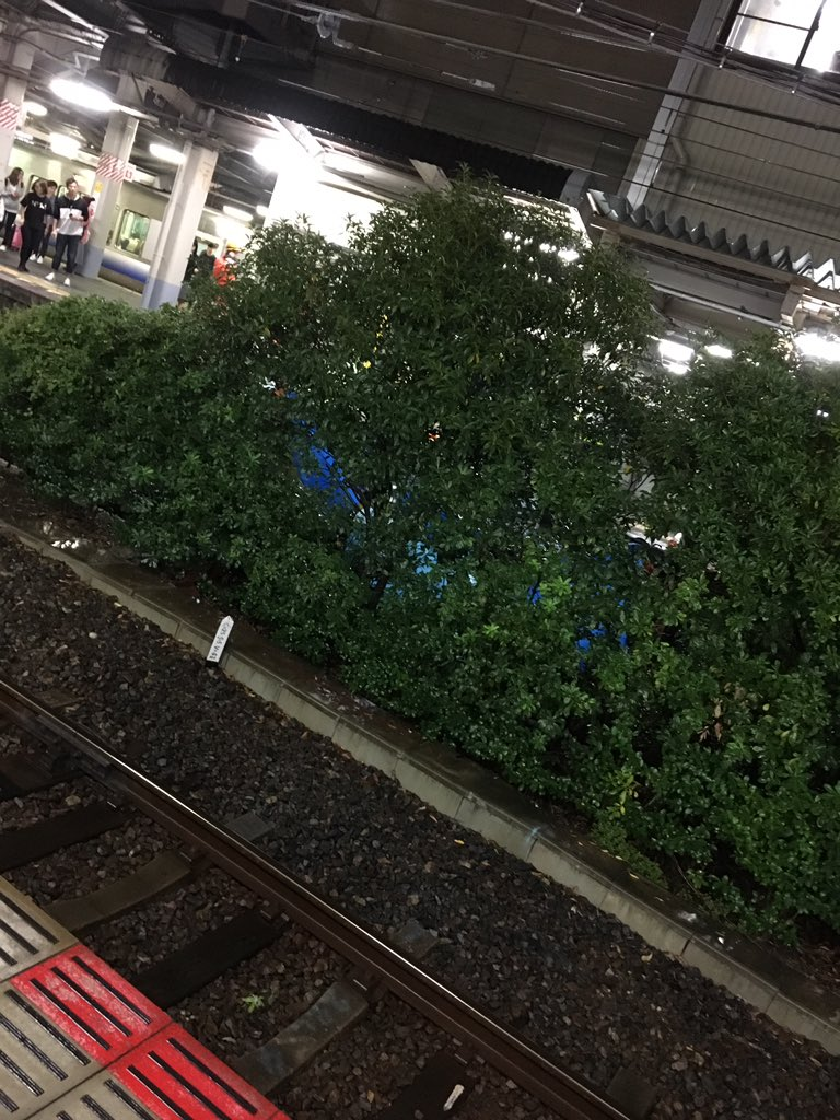 鳳駅で飛び込み自殺の人身事故が起きた現場画像