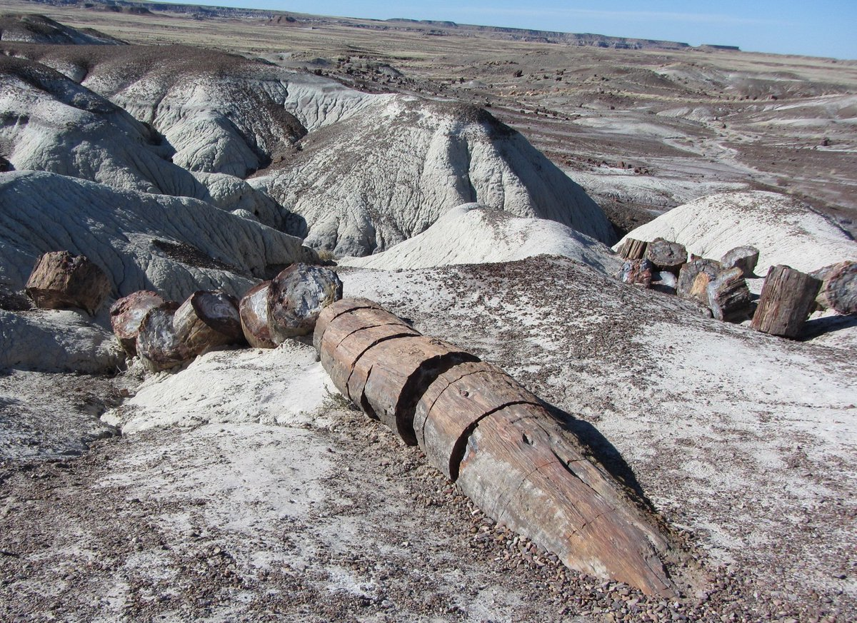 Petrified logs from Late Triassic trees at @PetrifiedNPS #FossilFriday <br>http://pic.twitter.com/x9VRX9G8d3