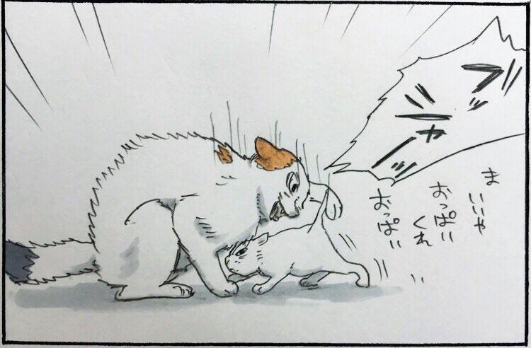 『モチャvsミルク』