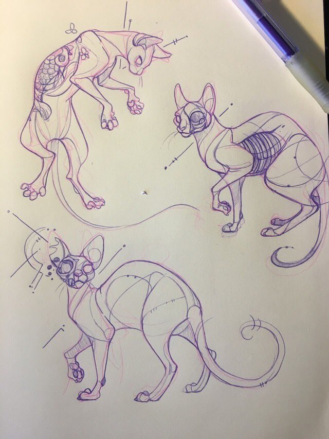 A more recent #FlashbackFriday, sphynx cats are one of my fav go to subjects for photo studies. You can see how everything works anatomy wise! <br>http://pic.twitter.com/Dx2KlIg8BH