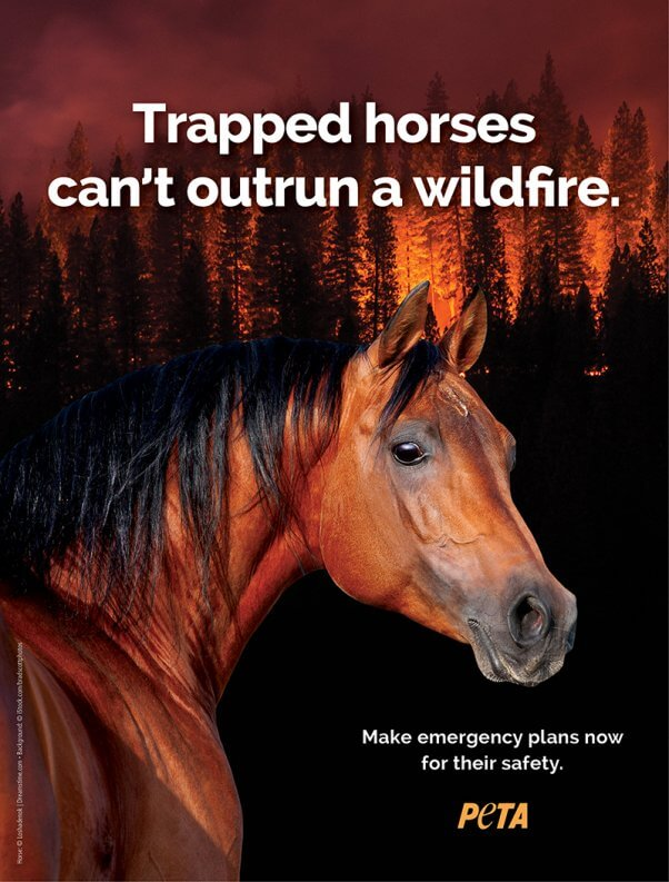 @janewells Please share these lifesaving tips for keeping animals safe during wildfires & evacuations:     https://t.co/8kay8UuB3z#WoolseyFire#HillFire#CampFire