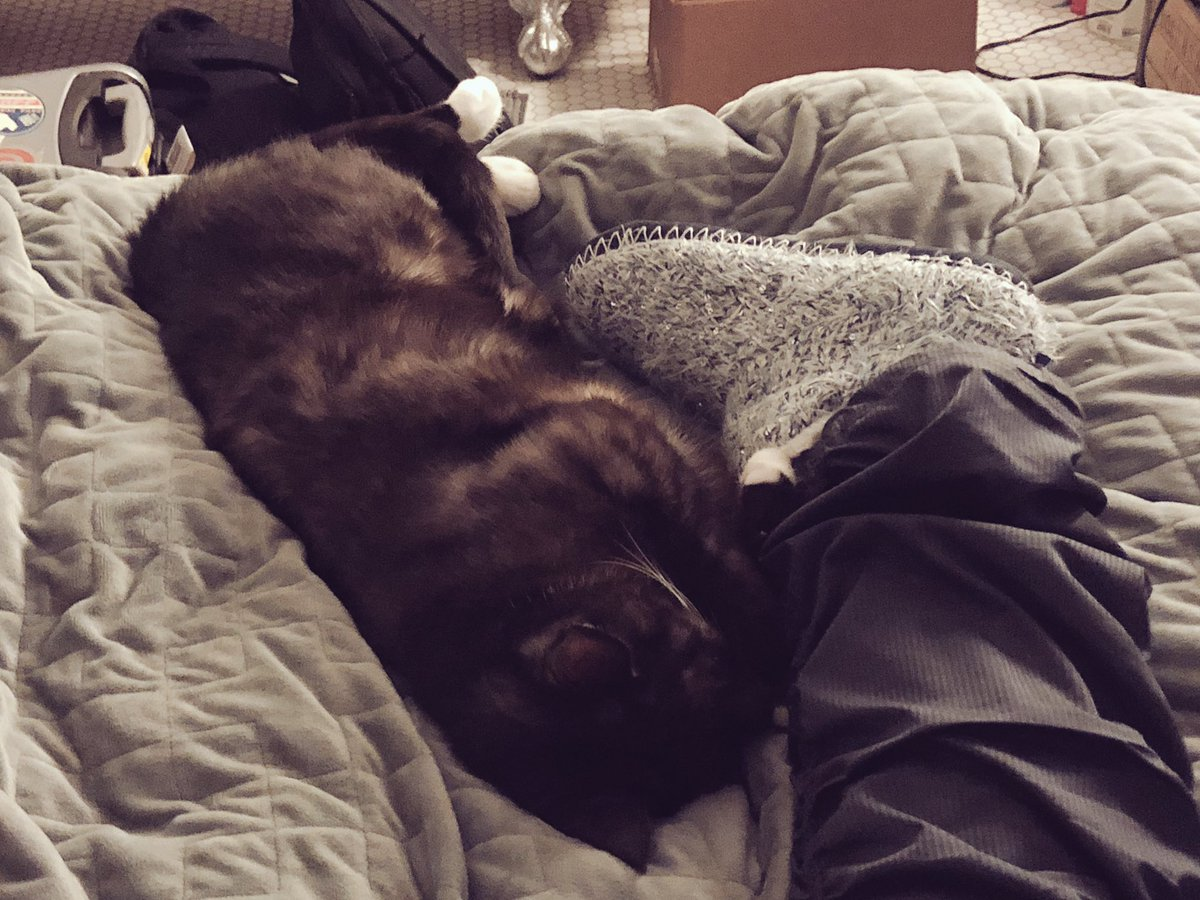 He slowly moved up my leg 🤣 #OdinIsACat