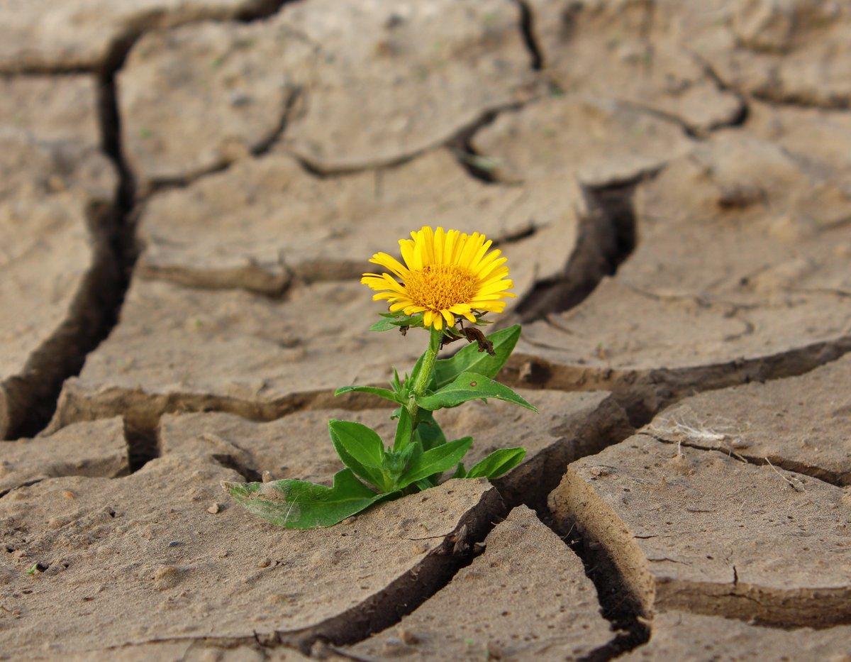 Es gibt immer eine Möglichkeit! http://gie-institut.de/MentalcoachundewusstseinstrainerIn… #möglich #möglichkeit #impuls #impulse #esgehtimmerweiter #glückisteineentscheidung #entscheidung #weiterbildung #weiterkommen #sichtwinkel #ansichtändern #wahrnehmung #achtsamkeit #blickwinkel #querdenken #andersdenkenpic.twitter.com/n4UMhE7cHg