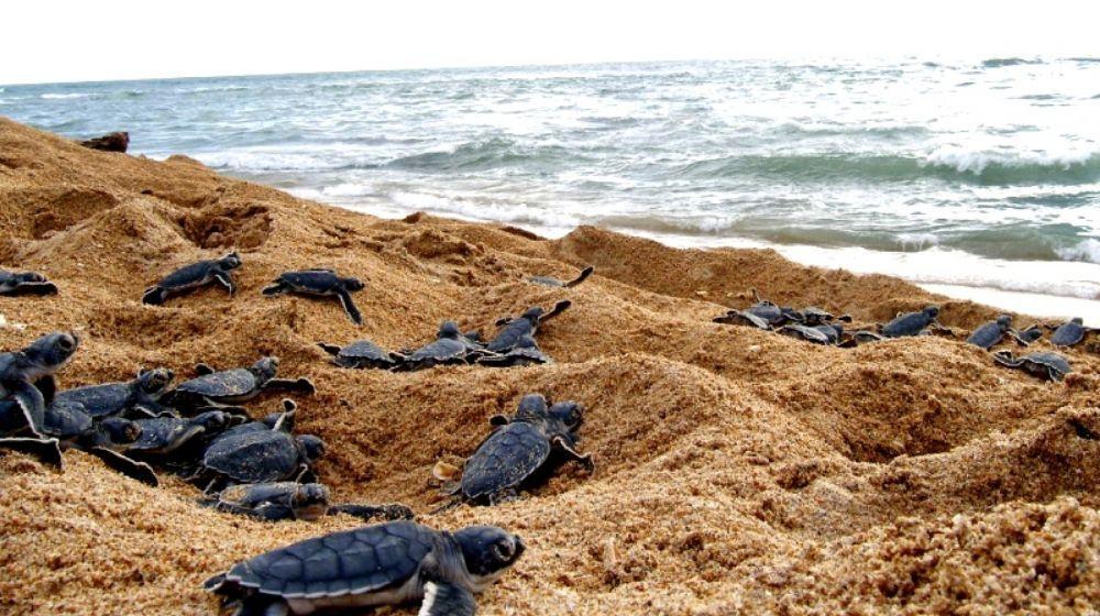 """Twitter पर La Pareja Viajera: """"🐢¿Dónde ayudar a liberar tortugas en  México? 🏖️ #Ecoviajes Oaxaca en Mazunte y Puerto Escondido Jalisco y  Nayarit en la Riviera Nayarit Guerrero en Ixtapa y Zihuatanejo"""