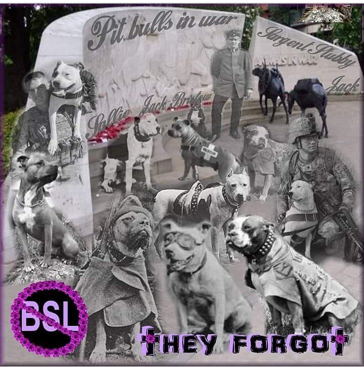 #bullterrier #breeds were used in war due to their #loyalty #Bravery #compassionate nature &amp; sturdy body. They gave so much to their comrades. Now look at how they&#39;re treated, because of people&#39;s actions! It&#39;s time to #endbsl &amp; #DDA &amp; #educate #dontdiscriminate #bullawareness<br>http://pic.twitter.com/XIj3xe46DO