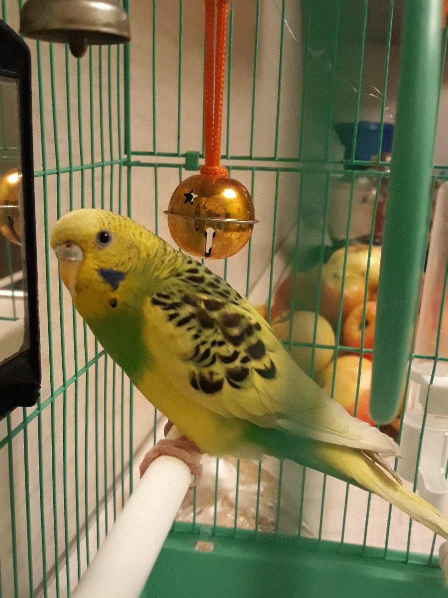 Одногрупник подарил попугая) Знакомтесь - это Джису💗  *И я уже учу её говорить корейские слова*