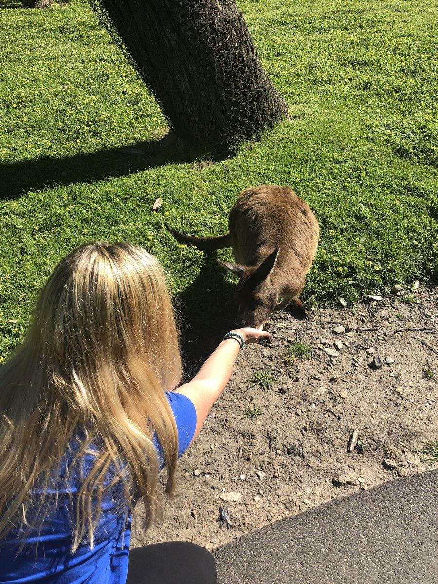 So I got to feed and pet kangaroos this morning 💕