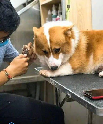 爪を切ってもらう犬