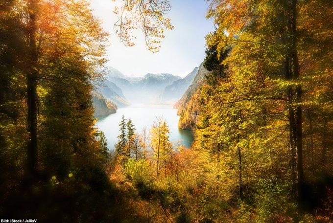 Goldener Spätherbst im Süden Deutschlands: Mit dieser Aufnahme aus dem #Nationalpark Berchtesgaden wünschen wir Ihnen einen schönen und erholsamen #Sonntag. 🍂☀🌳 Mehr Infos zu diesem und weiteren Nationalparks auf Foto