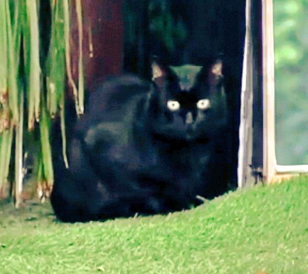 El gato es precioso!😍 Vino a decirle a makoka que se vaya haciendo la maleta jaja 😂😂 #SomosLaAudiencia10 Foto