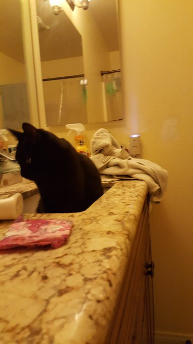 Hap #caturday Your girl caught her dumb boy in the sink tho Photo