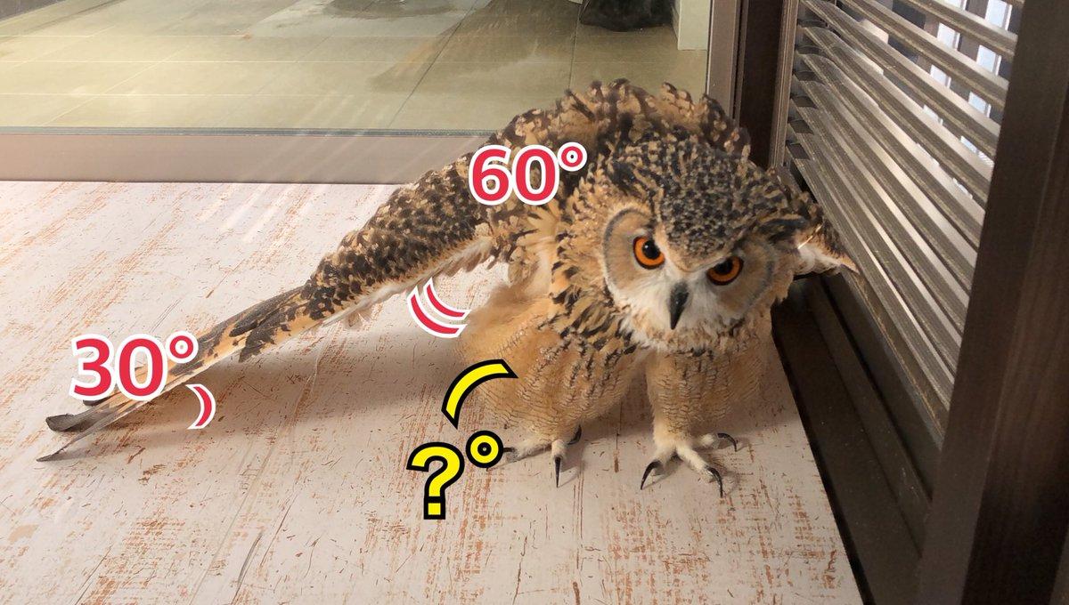 RT @Gen3Act03: 【問1】次のフクロウが示す三角形の?°の角度を求めよ。ただし、脚の羽はモフモフしているものとする。 https://t.co/wx8vTwp1Ma