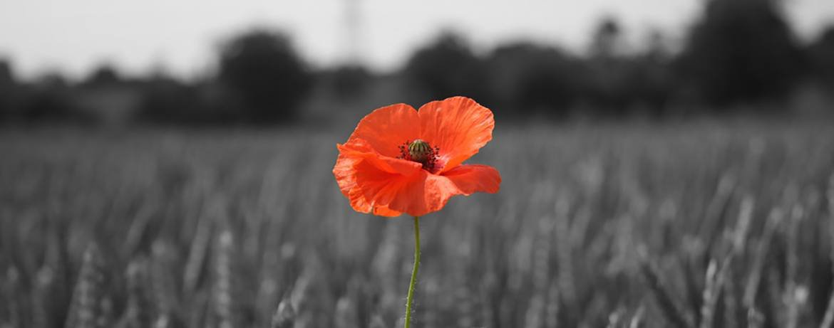 #Lestweforget #Remembering100years