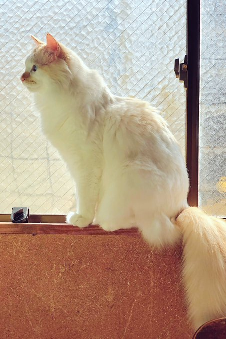 He is the most favorite of the window here. He looks shining. #Caturday Photo