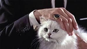 犯罪組織のボスが猫を膝に乗せて撫でているパターン、あれはただの様式美ではありません常にストレスにさらされ、周りの人間を信用することもできず、癒しを得られる相手は猫しかいない。そんな組織のトップの、孤独のメタファーなのです