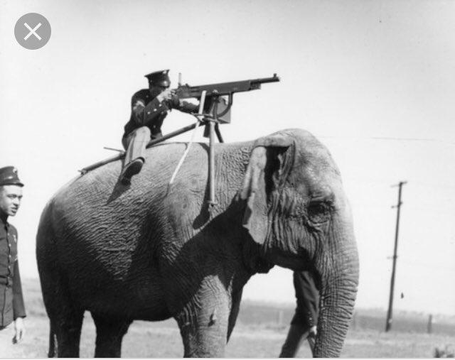Животные на 1-й Мировой Войне