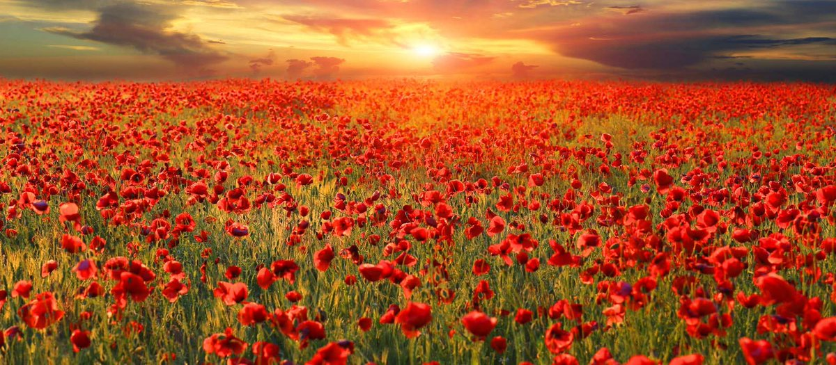 For all those who sacrificed their lives for ours. #LestWeForget
