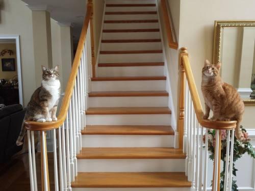 『よく来たにゃ』「ご主人様は2階でお休み中にゃ」