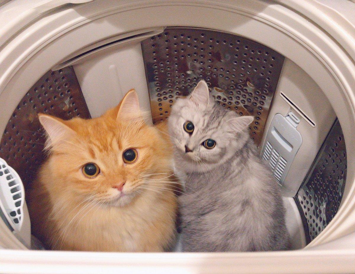 洗濯機に入っておどかしてくるラフテー&もずく?はーーーびっくりしたおやすみ!!!?