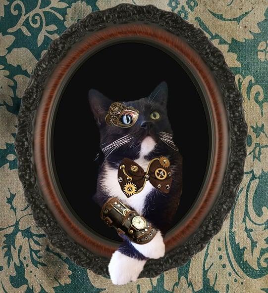 We felt like having a Steampunk Sunday. 🐈  #CatsOfTwitter #CATS 🐾 #steampunk #steampunkcats #cosplay 🐾