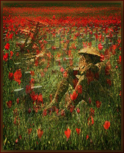 RT @PhotoTimeGeo: #RemembranceDay2018  Flanders fields #poppies https://t.co/BK0rQswom3
