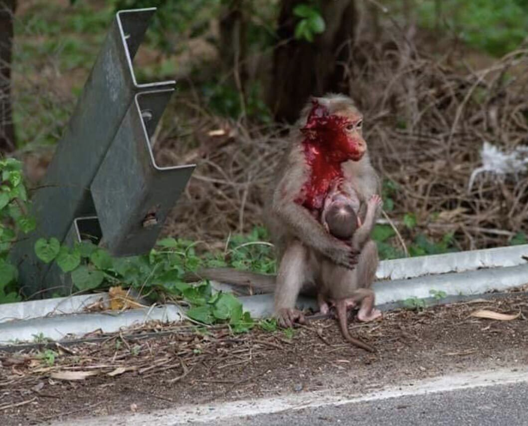 Please drive slowly while driving, dont kill the animals. They have families too. #Damanekoh #Islamabad @dcislamabad #Fixit <br>http://pic.twitter.com/COfYjFevCs