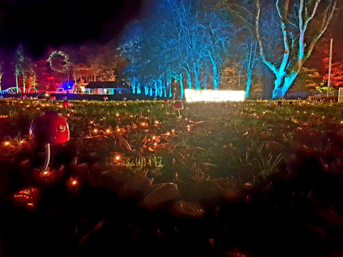 Have you seen our pixie garden yet....? #illuminightlidl