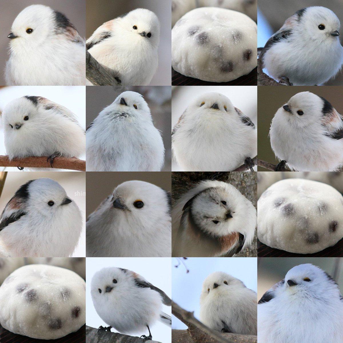 北海道でシマエナガという鳥さんをやってます #私を布教して