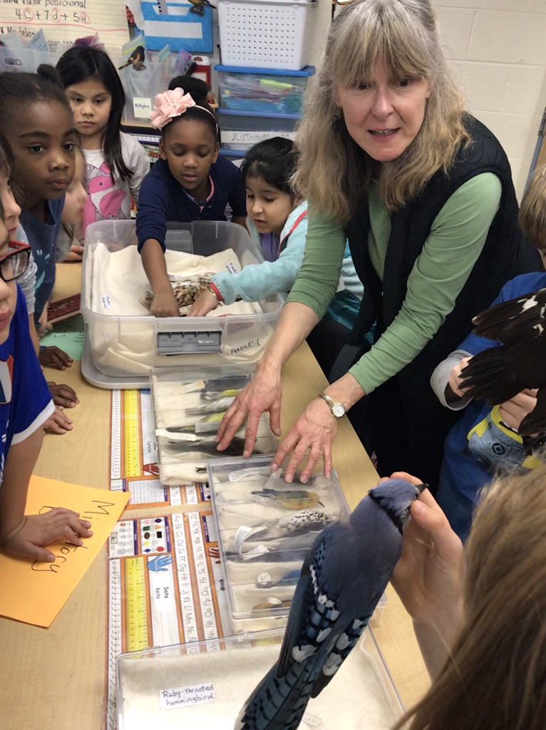 Thank you Mrs. Deinlein for coming all the way from the Migratory Bird Center in DC to teach us about bird characteristics, special features and showing us the difference between migratory and resident birds @LakeAnneES #Bridgingtheamericas
