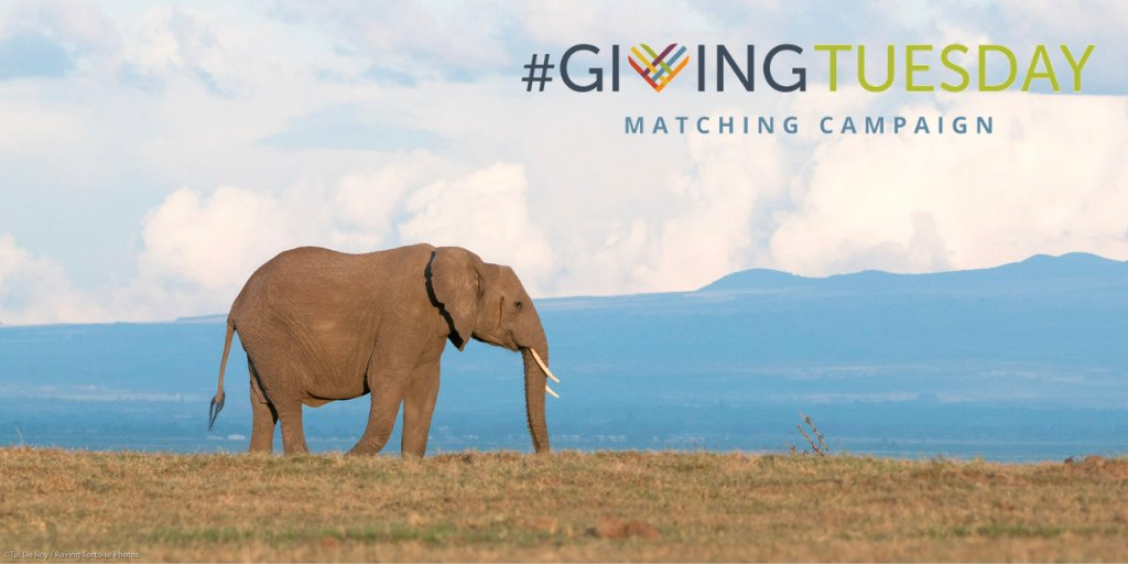 Ol Pejeta Giving Tuesday Elephant Image