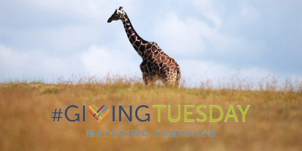 Ol Pejeta Giving Tuesday Giraffe Image