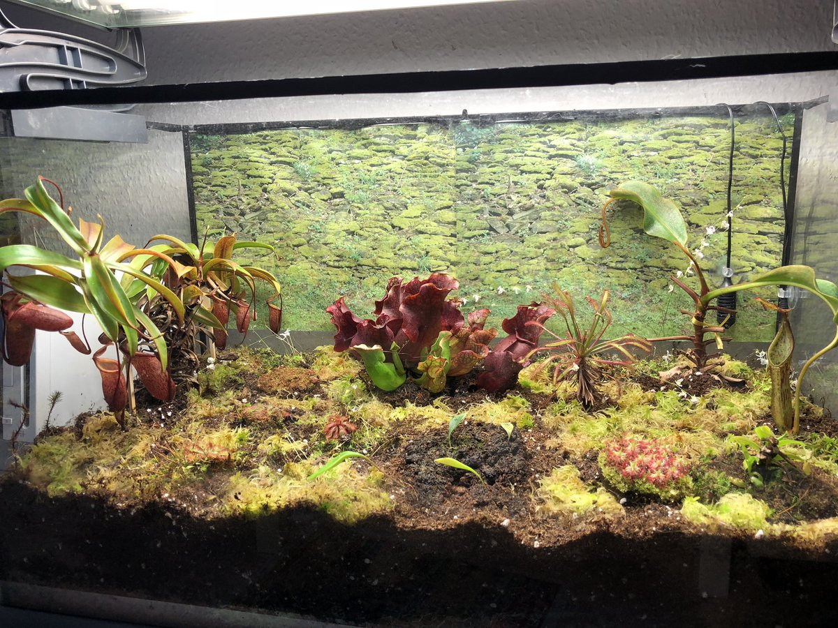 Dr Manuela Rossol On Twitter The Carnivorous Plant
