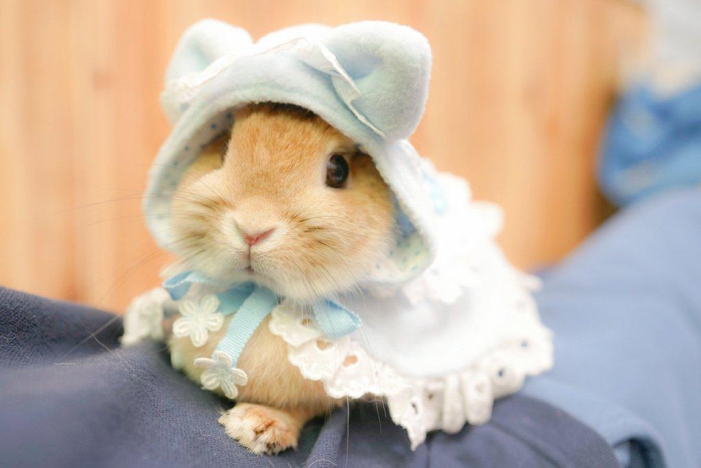 めっちゃ可愛いウサギちゃんwwwwww