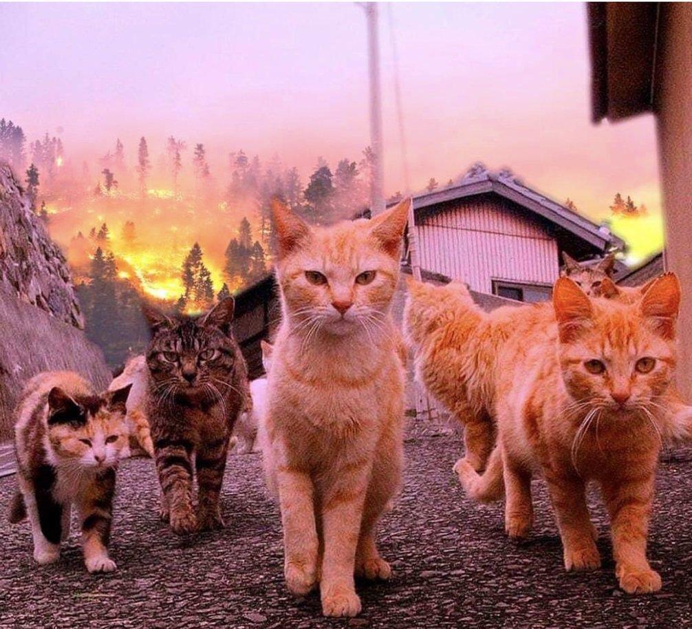 Ваза, картинки и видео про кошек смешное