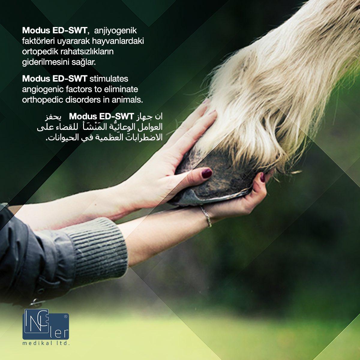 Modus ED-SWT anjiyogenik faktörleri uyararak hayvanlardaki ortopedik rahatsızlıkların giderilmesini sağlar.  Modus ED-SWT stimulates angiogenic factors to eliminate orthopedic disorders in animals.  http://www.incelermedikal.com  #edswt #edswttedavisi #fizyoterapist #fizyoterapi #eswtpic.twitter.com/aK5nGIMJvJ