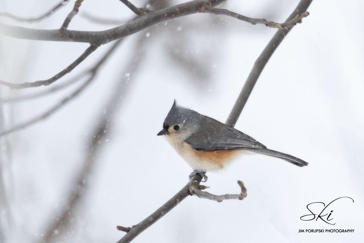 Bird by the snow (photo)