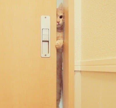pls rt 🐱💞 #MY990000  Catnip #markno  มาร์คอาจจะเป็นกัญชาแมว น้องเลยติดแจขนาดนี้  💛 https://bit.ly/2DOd1bJ