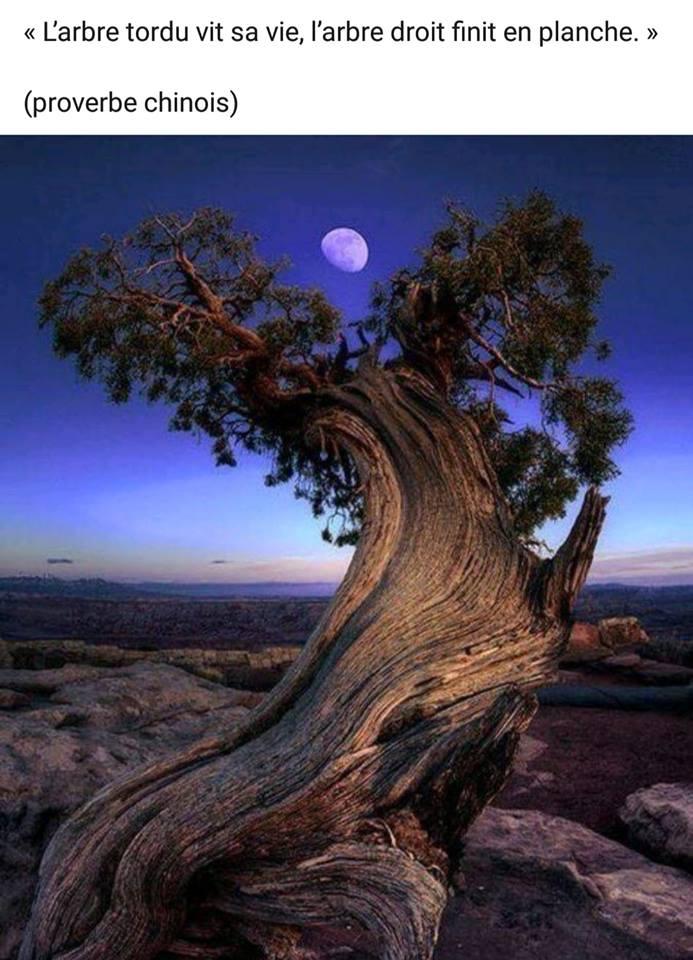 arbre tordue