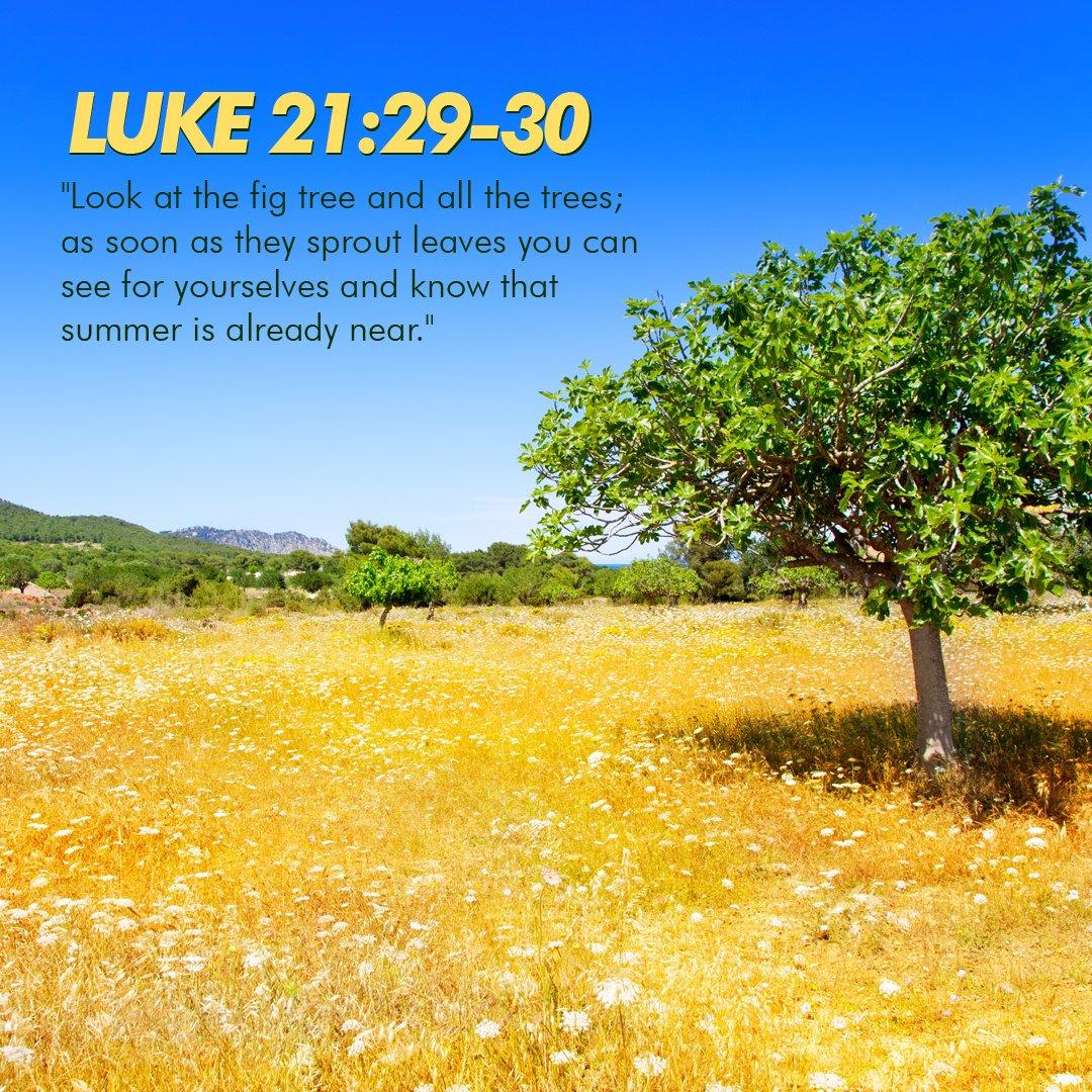 luke 21 29