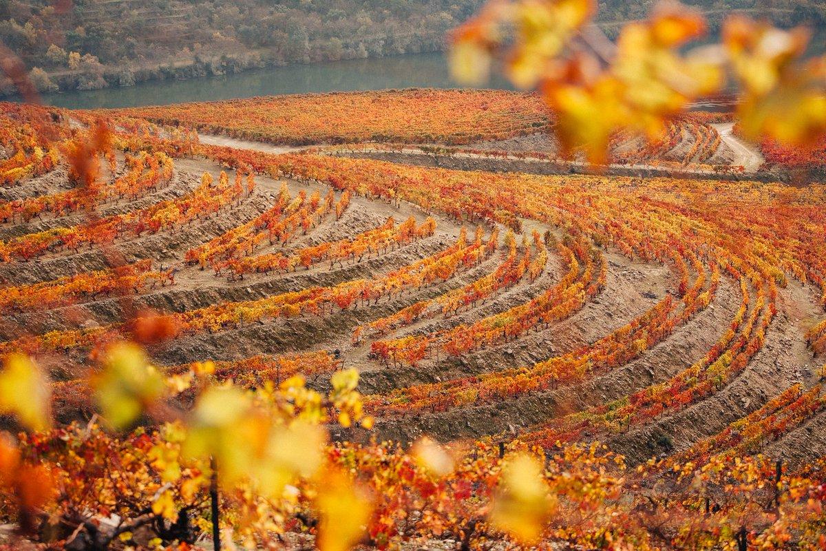 Douro Valley Autumn Travel