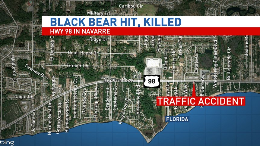 #BREAKING: A black bear has been hit and killed on Hwy 98 in Navarre. FHP tells me a single car hit the bear. No injuries to passengers in the vehicle.   @weartv<br>http://pic.twitter.com/FuvMJS68GL